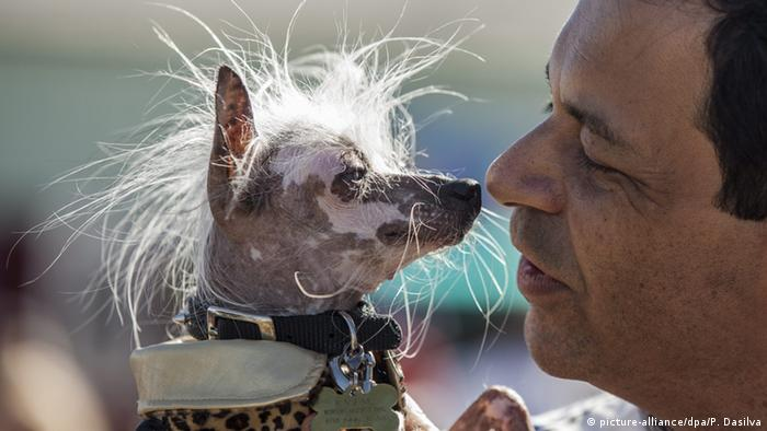 Hundeschau The World's Ugliest Dog in Petaluma Kalifornien (picture-alliance/dpa/P. Dasilva)