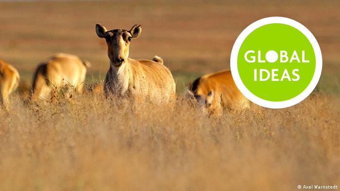 globalideas Teaser – Saiga1_mit Logo