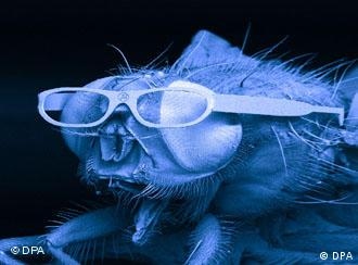 A close-up image of a fly with glasses