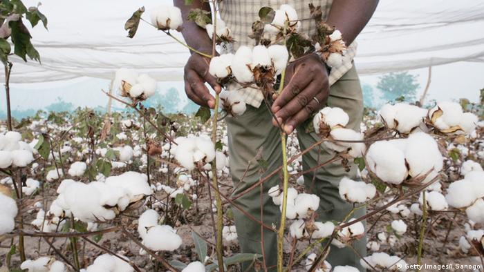 Burkina Faso Baumwolle Farm Gentechnik