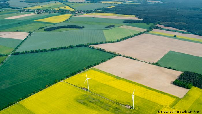 Deutschland Agrarlandschaft mit gelben Rapsfeldern in Brandenburg