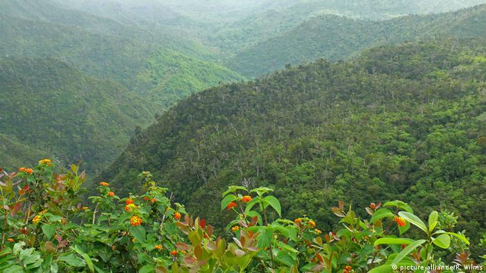 Green hills covered in primal forest in Mauritius (Photo: picture-alliance/R. Wilms)