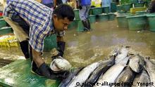 Arbeit auf einem thailändischen Fischmarkt
