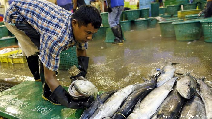 A Myanmar migrant worker sorting fish for sale at a seafood market in Samut Sakhon province, Thailand
