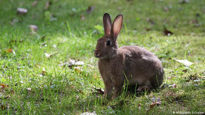 Berlin Wildtiere Kaninchen