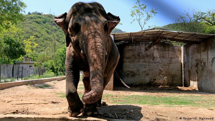 Pakistan Elefant Kavaan in Islamabad