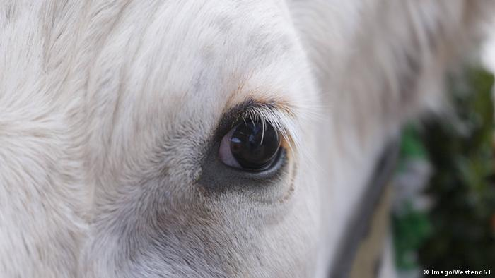 Close-up of cow's eye Copyright: Imago/Westend61