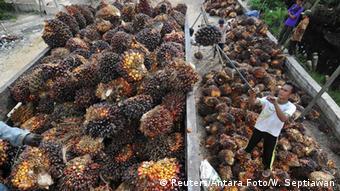 Indonesien Sumatra Palmfrüchte werden aufgeladen