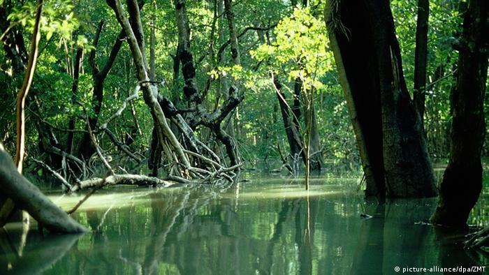 Mangrovenwald in Australien
