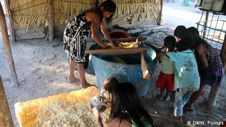 Munduruku producing manioc flour