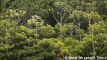 Brasilien Regenwald im Amazonasgebiet