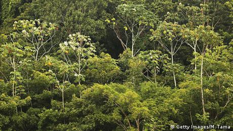 Rainforest in Brazil's Amazon region