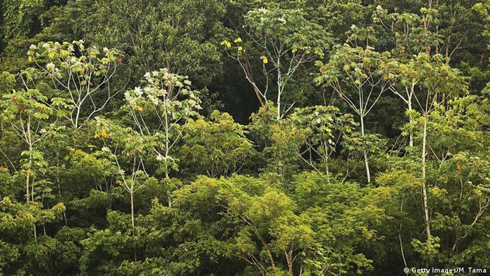 Amazon rainforest trees stand as seen from a transport riverboat (Getty Images/M. Tama)