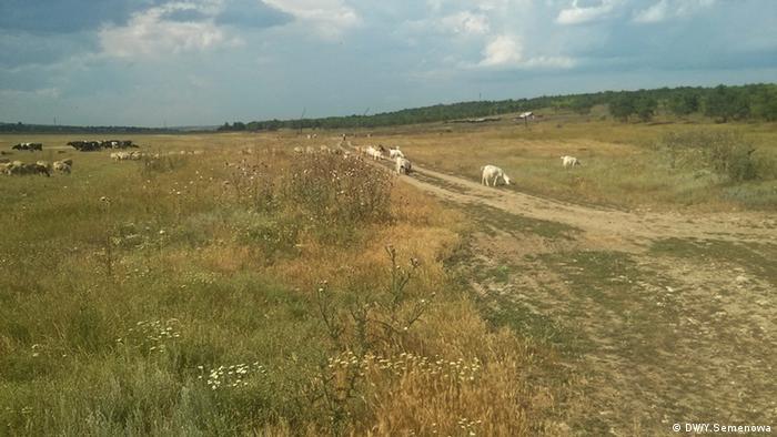 Буджакская степь