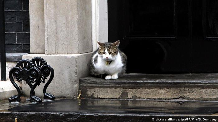 Downing Street's tomcat, Larry (picture-alliance/dpa/PA Wire/S. Dempsey)