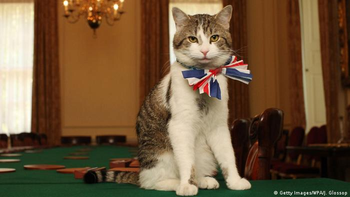 Larry the Downing Street Katze