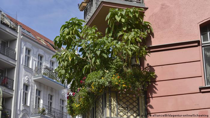 A flourishing balcony in the Schoneberg district of Berlin (picture-alliance/Bildagentur-online/Schoening)