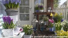 Balkon mit Zwiebelblumen im Frühjahr