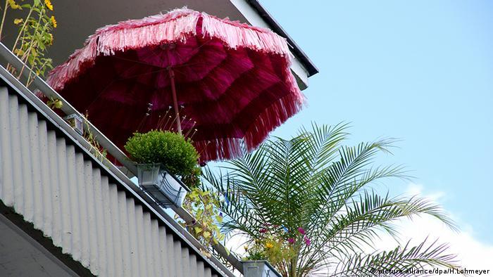 Тропічна парасолька та пальма на балконі