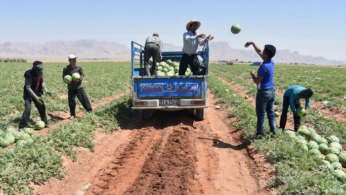 بنبست صادرات ایران؛ هندوانههای سرگردان