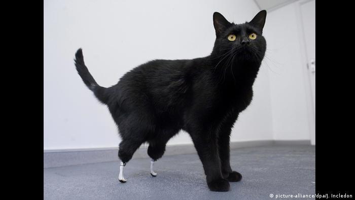 Tiere mit Prothesen Katze