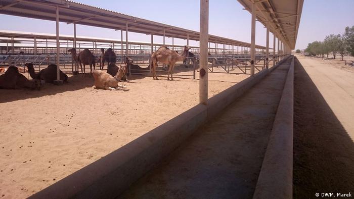 Kamelmilch aus Dubai