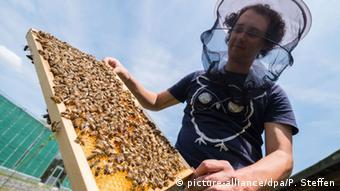 Bee studies in Braunschweig
