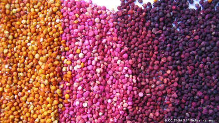 Quinua-Samen (CC BY-SA 3.0/ Michael Herrmann)