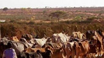 drought-hit field in Ethiopia