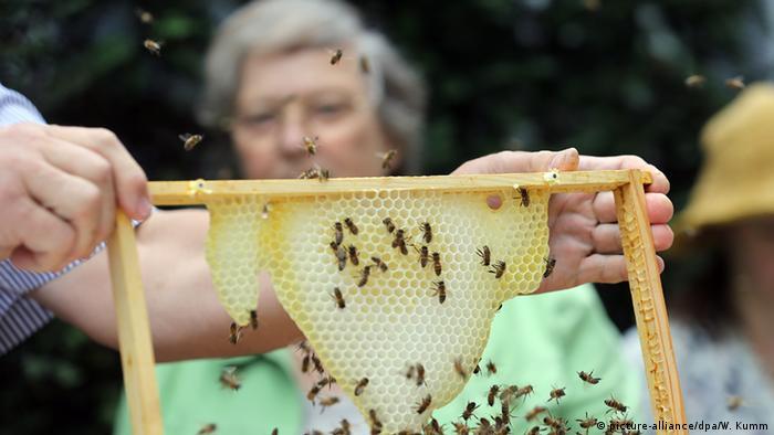 Deutschland Bärbel Höhn Honigschleudern Bundestagsbienen