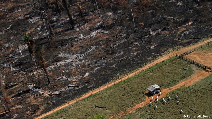 Pasto em área desmatada da Amazônia