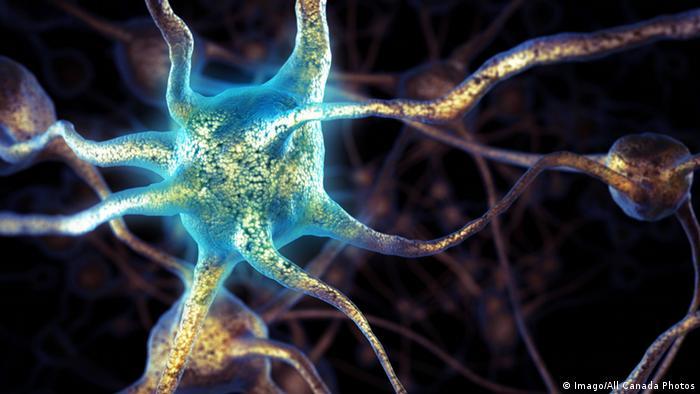 Общество: Brain cells (Imago/All Canada Photos)