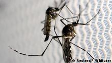 Aedes aegypti mosquitoes are seen inside Oxitec laboratory in Campinas, Brazil, February 2, 2016. REUTERS/Paulo Whitaker/File Photo Copyright: Reuters/P. Whitaker