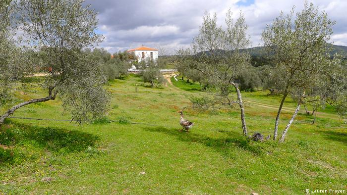 Geese browse on the landscape of Badajoz, Spain (Photo: Lauren Frayer)