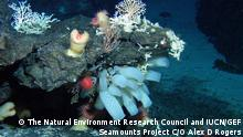 ***ACHTUNG: Pressebild nur für die aktuelle, themengebundene Berichterstattung*** Weltnaturerbestätten in der Hochsee: Diverse coral gardens and complex sea-cliff deep-sea communities characterized by large anemones, large sponges and octocorals at the Atlantis Bank, South West Indian Ocean Copyright: The Natural Environment Research Council and IUCN/GEF Seamounts Project C/O Alex D Rogers