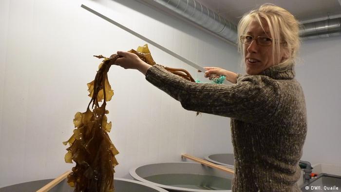 Ny Alesund Spitzbergen Wissenschaftlerin mit Seetang (Foto: DW)