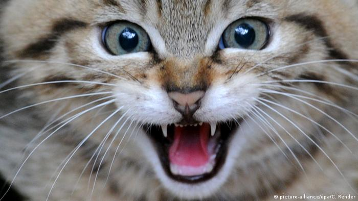 Восьмимесячный котенок по кличке Леон