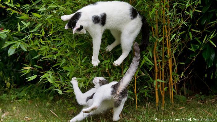 Неожиданная встреча кошек
