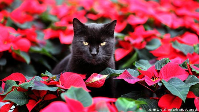 Найулюбленіше поєднання кольорів у святковому декорі - червоний із зеленим. Саме такими кольорами цвіте популярна серед німців на Різдво рослина молочай-різдвяник. Зелений символізує надію на життя, а червоний нагадує про кров Христову. Причиною домінування червоного в декорі може бути ще й те, що раніше виробництво цієї фарби було дуже дорогим. Тому її використовували лише під час урочистостей.