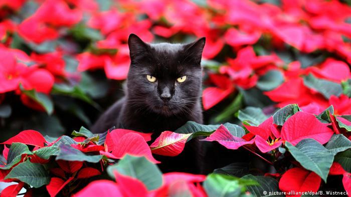 Кот по кличке Эльмо