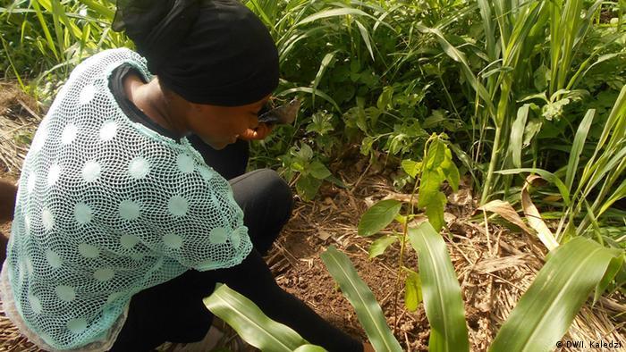 a female volunteer helping to plant seedlings Copyright: DW/I. Kaledzi