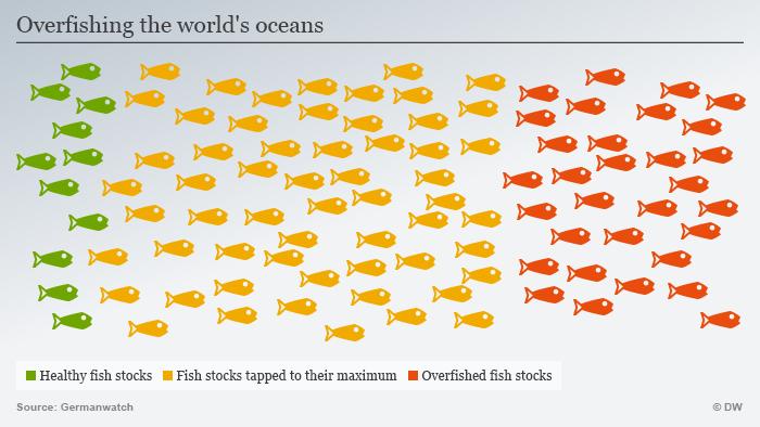 Infografik Fischbestand Englisch