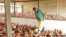 Hühnerfarm in Ghana