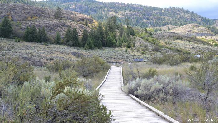 A wooden boardwalk snakes through the Okanagan Desert near Osoyoos, Canada (Photo: Adrien le Coärer)