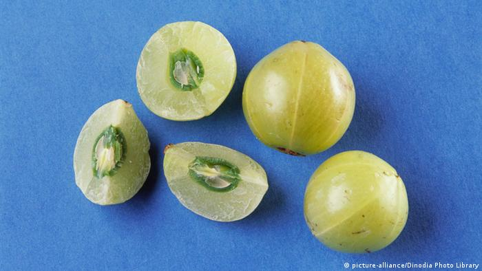 Frucht von Indian Gooseberry (picture-alliance/Dinodia Photo Library)
