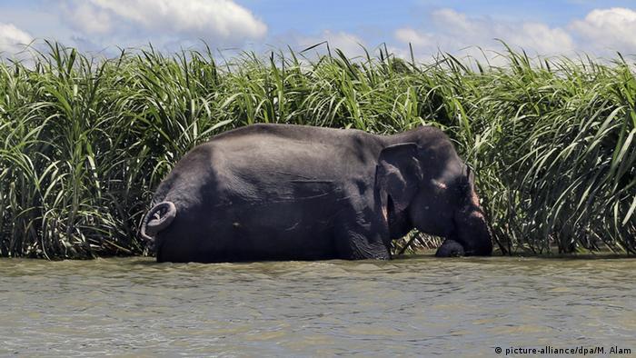 Wandernde Arten: Wenn Tiere auf Weltreise an Grenzen stoßen