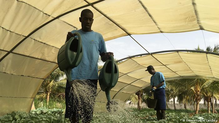 Students water plants in a farming school