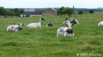 Freilichtmuseum Kommern Kühe