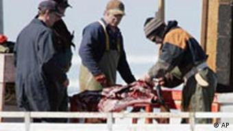 Hunters skinning a seal