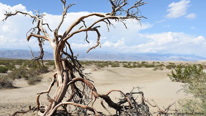 د دیت والي (Death Valley) یا «د مرګ درې» ملي پارک د امریکا تر ټولو وچ او ګرم ملي پارک دی. په دوبي کي د هغه ګرمي ۴۰ درجو سانتي ګراد ته رسیږي. خو پردې سربیره په دغه پارک کي ۳۶ مختلفي خزندې او ۳۰۷ مرغان ژوند کوي. دغه پارک همیشه داسي وچ هم نه وي. د پسرلي د بارانو پر وخت هغوی رنګارنګ ګلان او شګوفې کوي.
